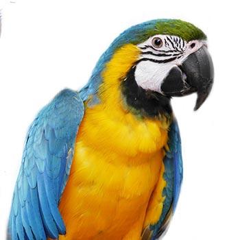 mascota-sep16-jason
