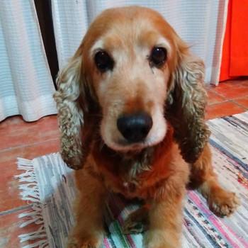 scotty mascota del mes de diciembre