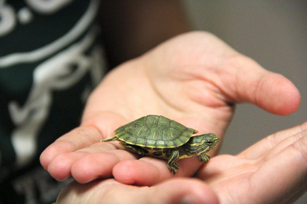 C mo cuidar una tortuga de agua vivir entre mascotas for Peceras para tortugas