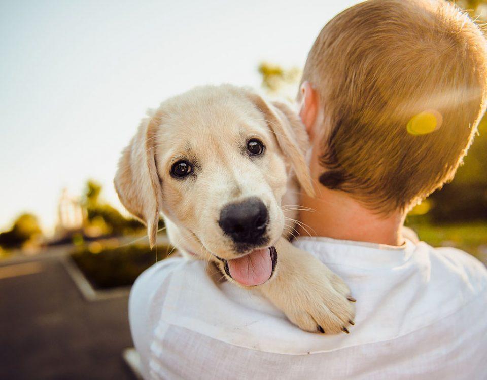 Cosas de perros: el tuyo se ríe de ti
