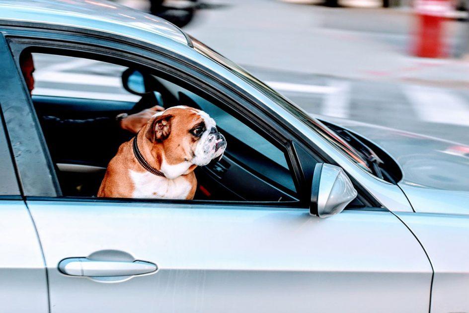 Destinos para viajar con perros