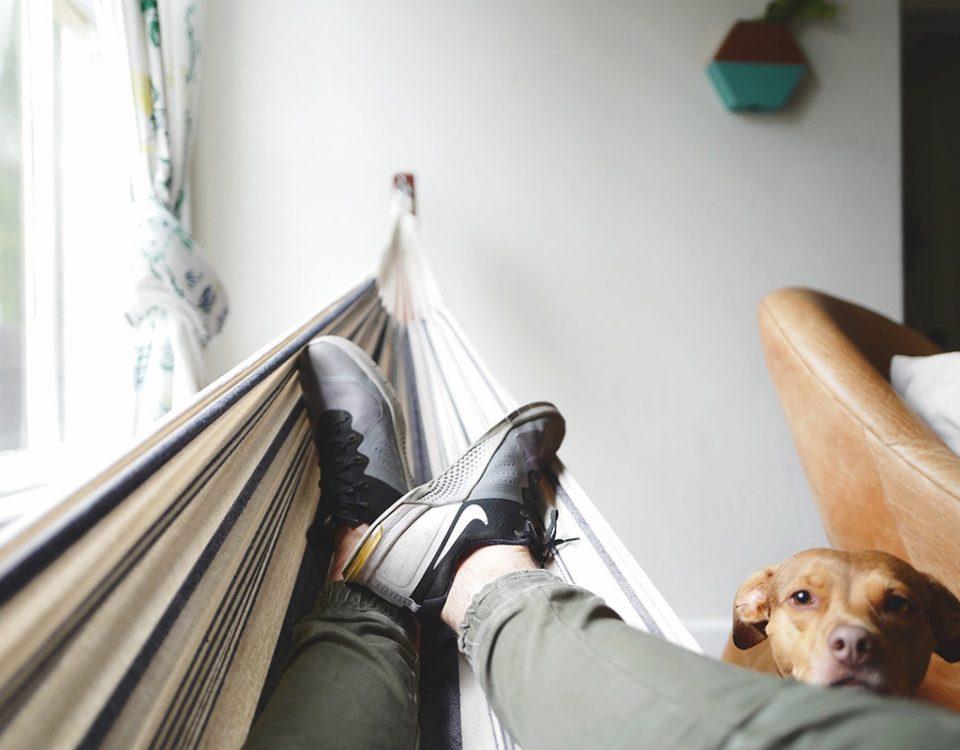 Dueños de mascotas: educar a un perro