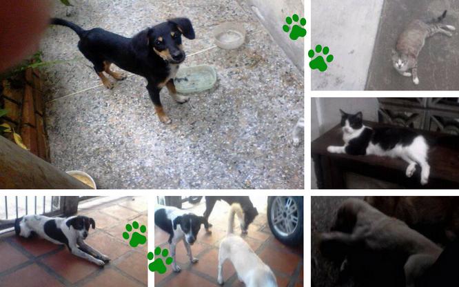 Mis mascotas y yo: Ilsa Carmona