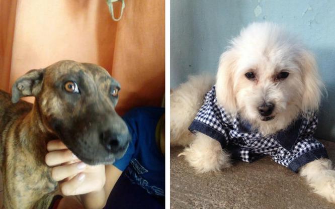 Mis mascotas y yo: Toreto y Betania