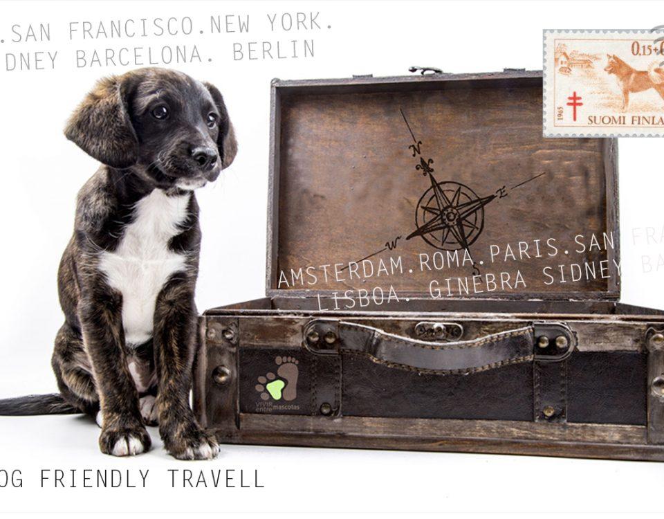 Viajar con perros