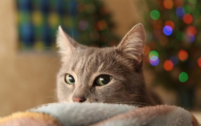 Mascotas en Navidad: ideas de regalo