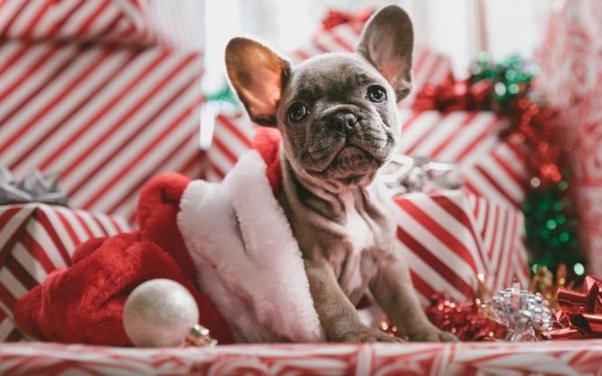 Regalos de Navidad para mascotas