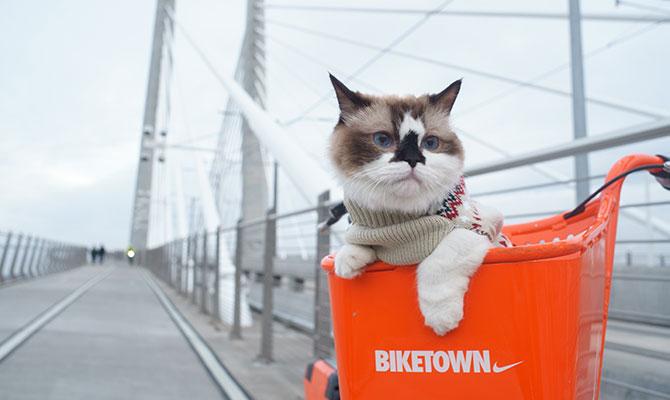 Cómo viajar con gato